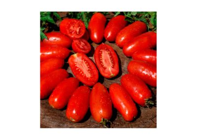 Red Magic San Marzano F1